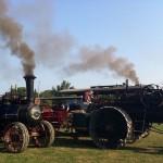 Antique steam tractors